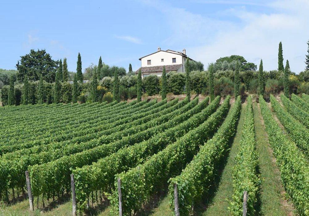 LE FASI DELLA VENDEMMIA Come nasce il vino italiano