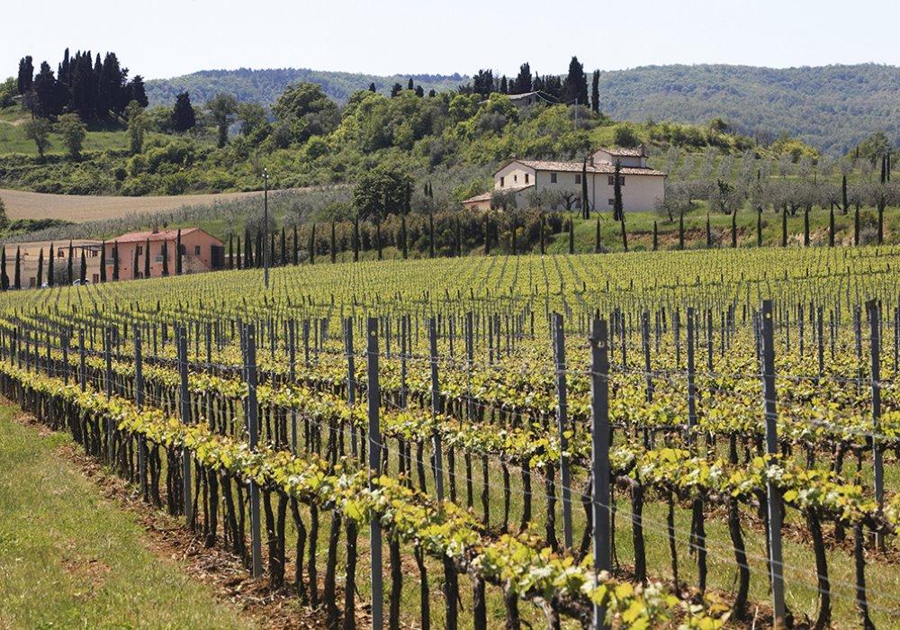QUANDO SI È INIZIATO A PRODURRE VINO Breve storia della viticoltura
