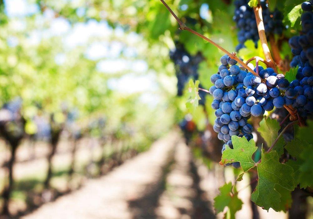 La Toscana del Vino che piace al Mondo 2 Città Toscane da Visitare se Amate il Vino