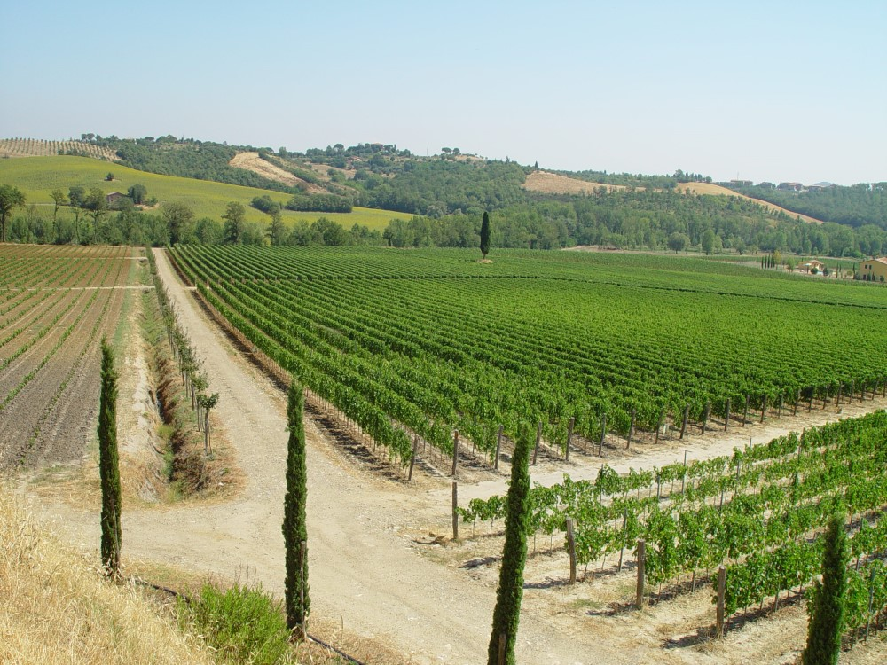 Vigneto Azienda agricola Lebuche